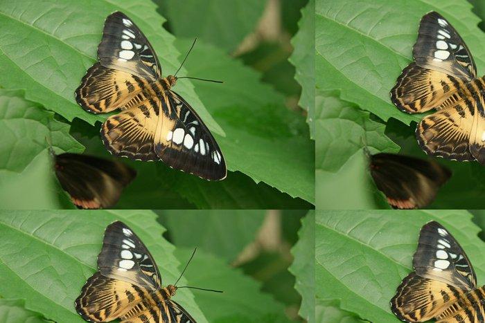 Vinylová Tapeta Papillon Nymphalidae - Témata