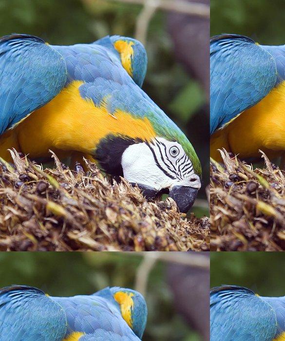 Vinylová Tapeta Papoušek jíst palmového oleje ovoce - Témata