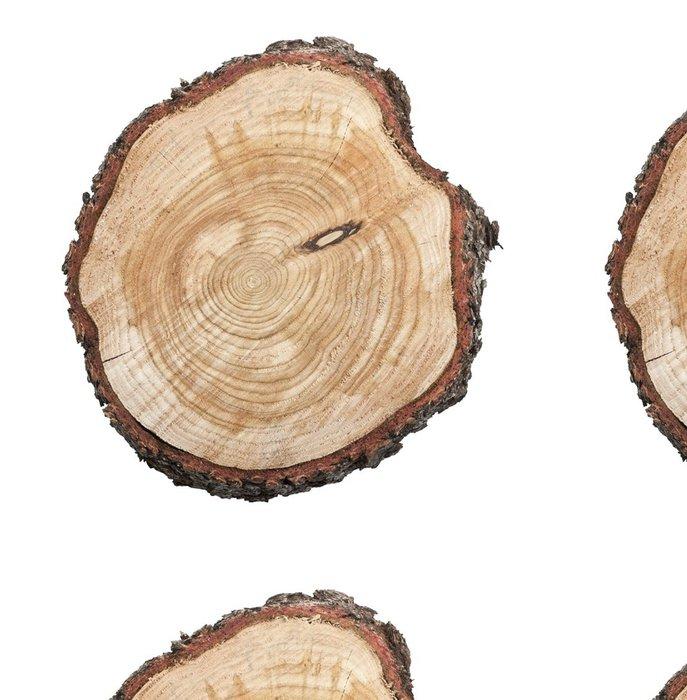 Tapeta Pixerstick Pařez izolovaných na bílém pozadí - Stromy