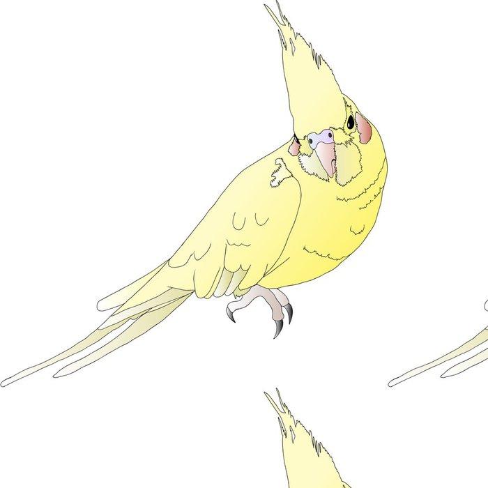 Tapeta Pixerstick Parrot - Korella - Ptáci