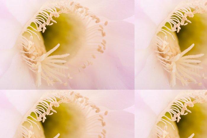 Tapeta Pixerstick Particolare del Fiore Echinopis varietà luna di miele - Květiny