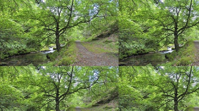Tapeta Pixerstick Paseo primaveral por el Bosque de Muniellos. - Stromy