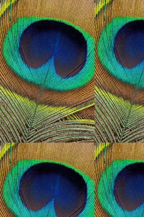Tapeta Pixerstick Peacock feather detail - Ptáci
