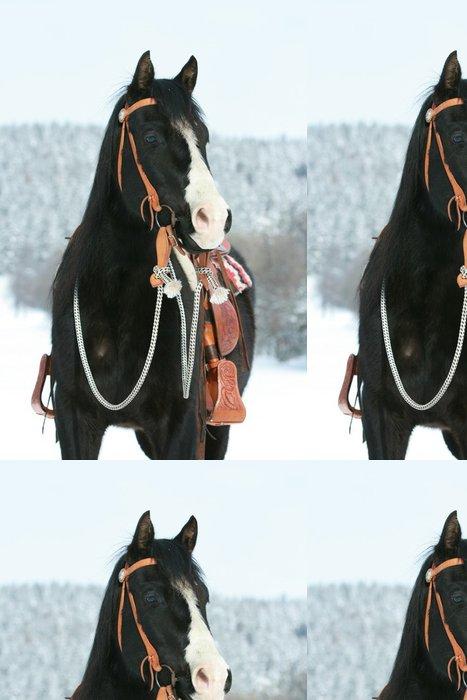 Tapeta Pixerstick Pěkná barva koně s koněm zařízení v zimě - Savci