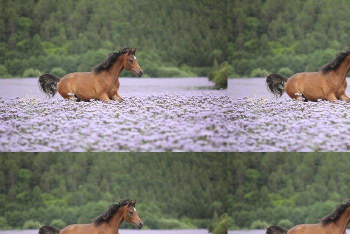 Tapeta Pixerstick Pěkný Arabský kůň běží v fiddleneck oblasti - Savci