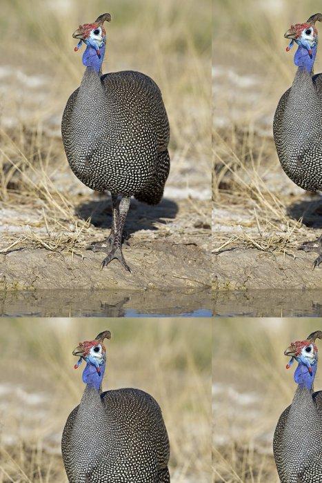 Tapeta Pixerstick Perličky stojící na napajedlo, Numida meleagris - Ptáci