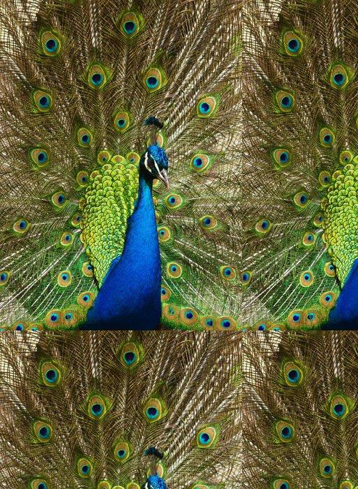 Vinylová Tapeta Pfau (Pavo cristatus) - Ptáci