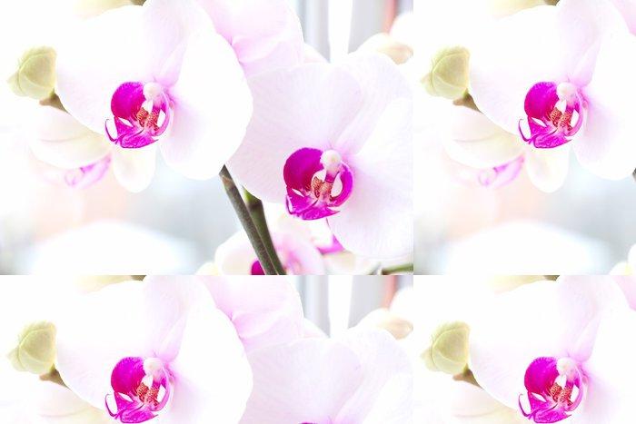 Vinylová Tapeta Phalaenopsis orchideje. Sem Phalaenopsis: červené rty - Květiny
