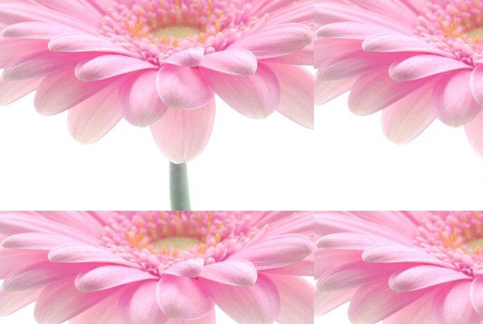 Vinylová Tapeta Pink gerbera - Květiny