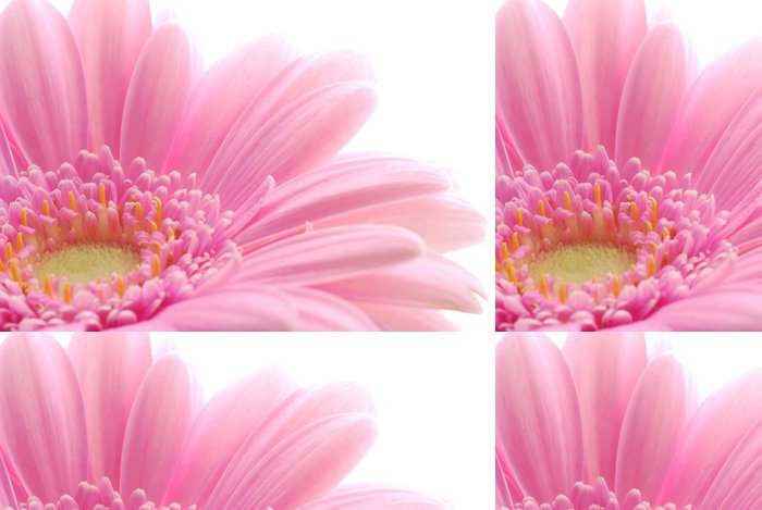 Tapeta Pixerstick Pink gerbera - Roční období