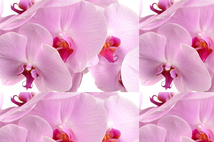 Tapeta Pixerstick Pink orchid flower close-up izolovaných na bílém - Rostliny