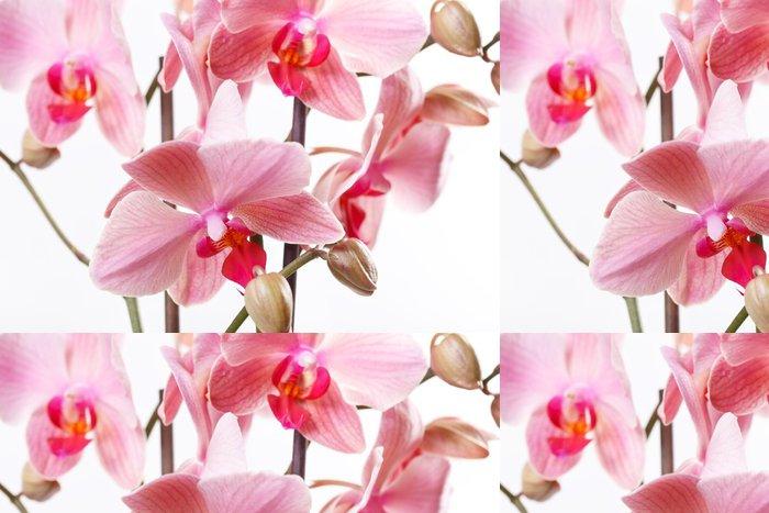 Tapeta Pixerstick Pink Orchid - Květiny