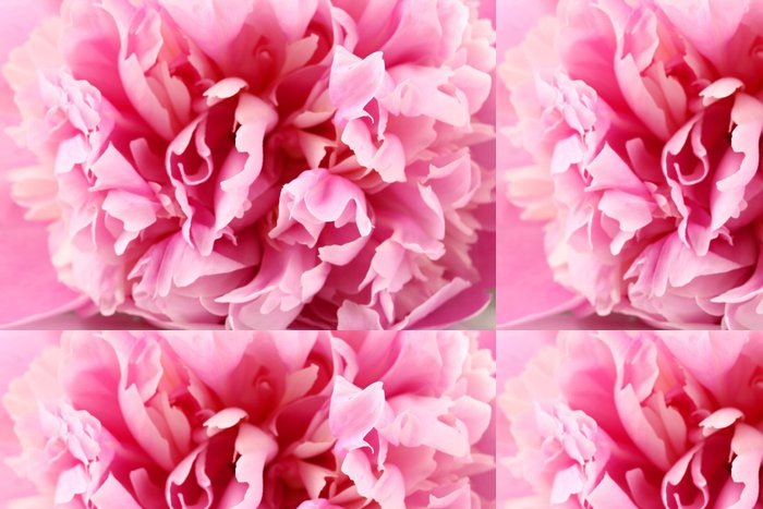 Vinylová Tapeta Pink pivoňka zblízka - Květiny