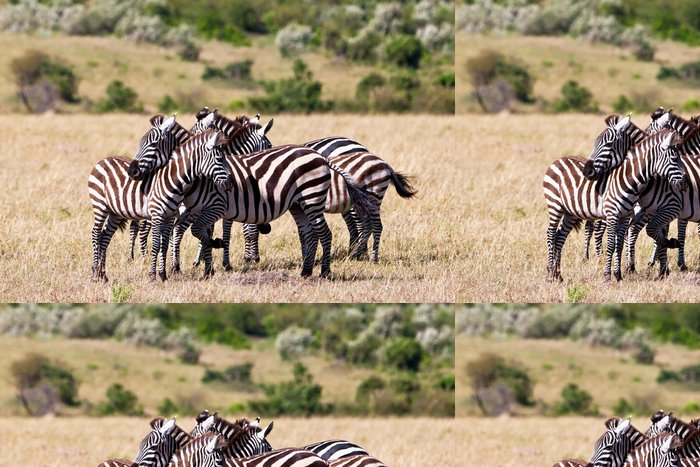 Vinylová Tapeta Plains Zebry na Savannah, Masai Mara, Kenya - Témata