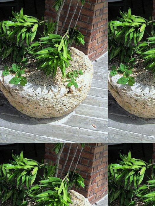 Tapeta Pixerstick Planta en macetero de Coralina a la Entrada del Jardin - Domov a zahrada