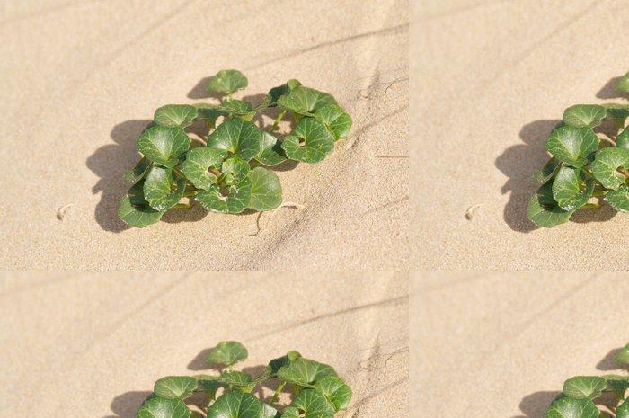 Vinylová Tapeta Plante sur la duna des Sables d'nebo A Barbatre - Rostliny