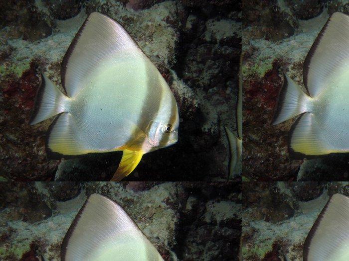 Tapeta Pixerstick Platax - Vodní a mořský život