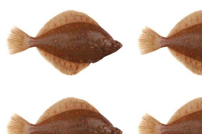 Vinylová Tapeta Platýs velký ryby - Nálepka na stěny
