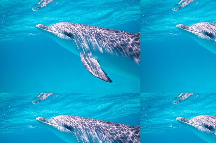 Tapeta Pixerstick Plavat s delfíny - Témata