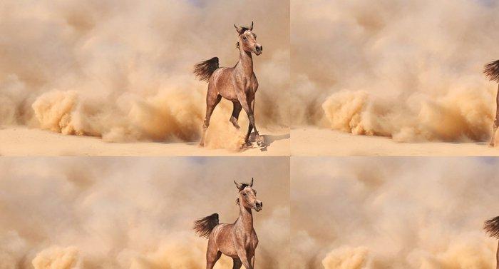 Tapeta Pixerstick Plemeno: Arabský kůň běží v poušti - Pouště