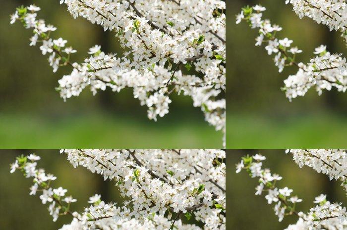 Tapeta Pixerstick Plum třešňové květy - Roční období