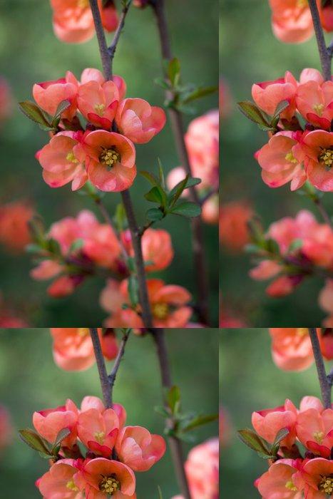 Vinylová Tapeta Pobočka japonské kdoule v květu - Květiny