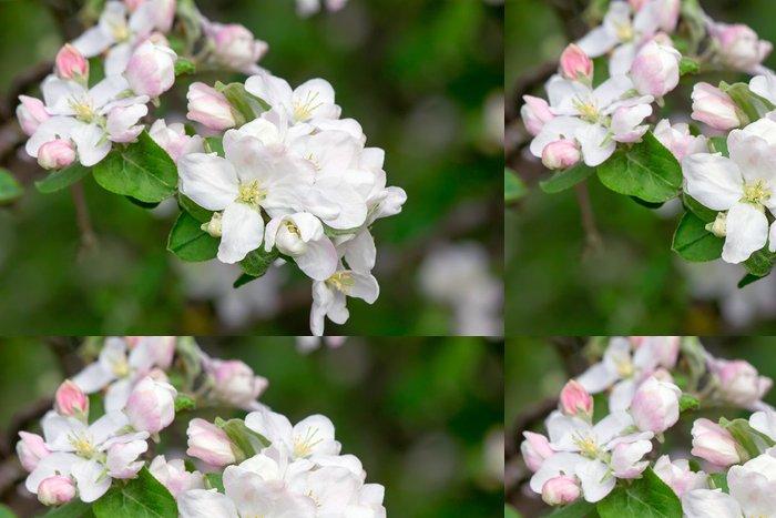 Tapeta Pixerstick Pobočka kvetoucí jabloň na pozadí zelenou zahradu. - Květiny
