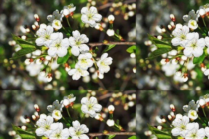 Tapeta Pixerstick Pobočka kvetoucí třešní v jarní zahradě - Stromy