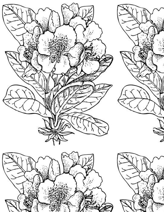 Vinylová Tapeta Pobočka rostlin Rhododendron caucasicum - Rostliny