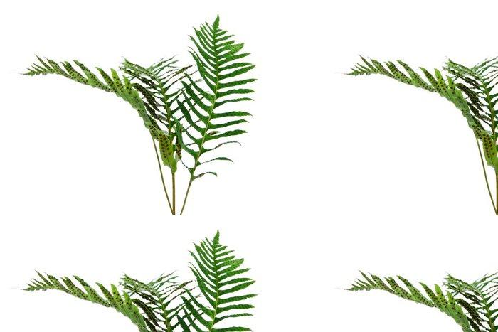 Tapeta Pixerstick Pobočky místa, kde rostou kapradiny. - Rostliny