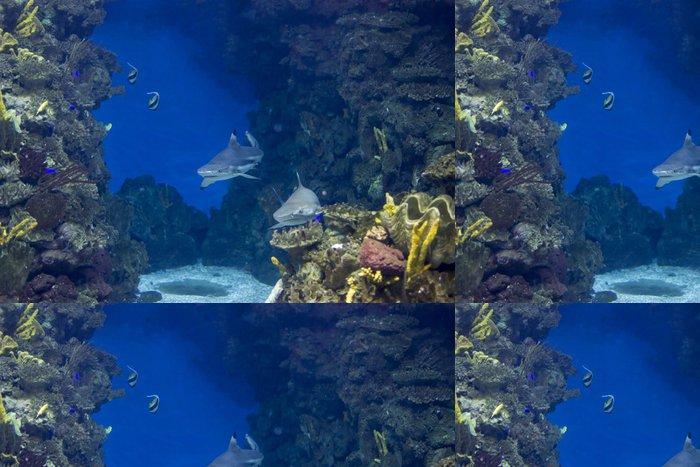 Tapeta Pixerstick Podmořský život - Vodní a mořský život