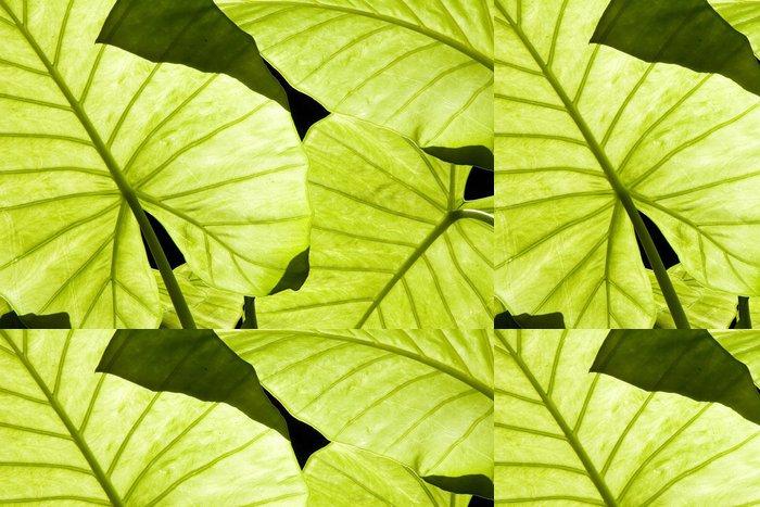 Tapeta Pixerstick Podsvícený Alocasia zelené listy zobrazující žilnatinou - Rostliny