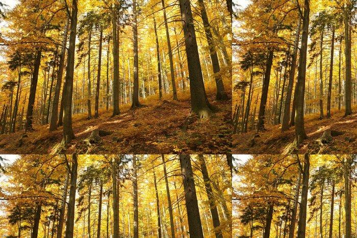 Tapeta Pixerstick Podzimní buk lesní na horském svahu - Stromy