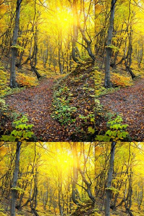 Tapeta Pixerstick Podzimní les - Outdoorové sporty