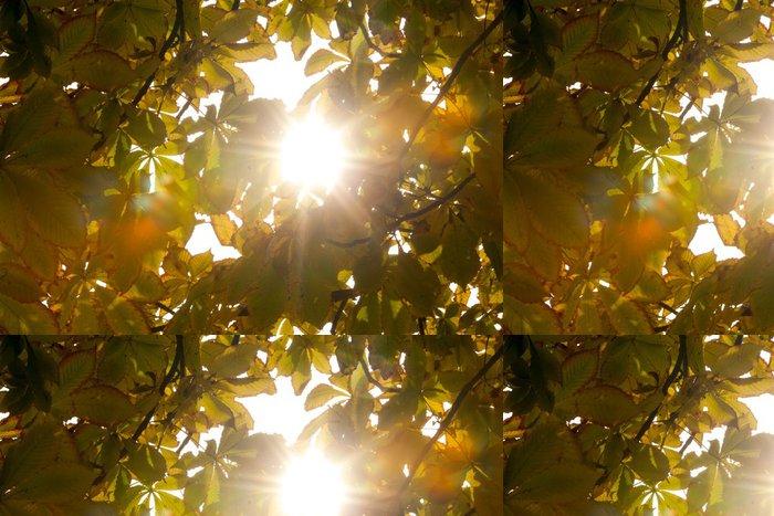 Tapeta Pixerstick Podzimní listí a sluneční světlo - Pozadí