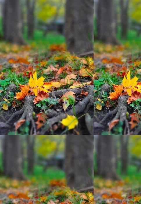 Vinylová Tapeta Podzimní listí v lese - Outdoorové sporty