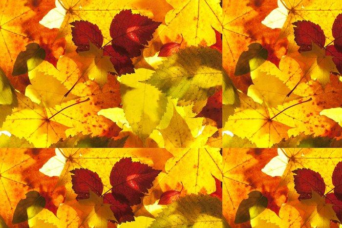 Tapeta Pixerstick Podzimní listí zblízka pozadí - Roční období