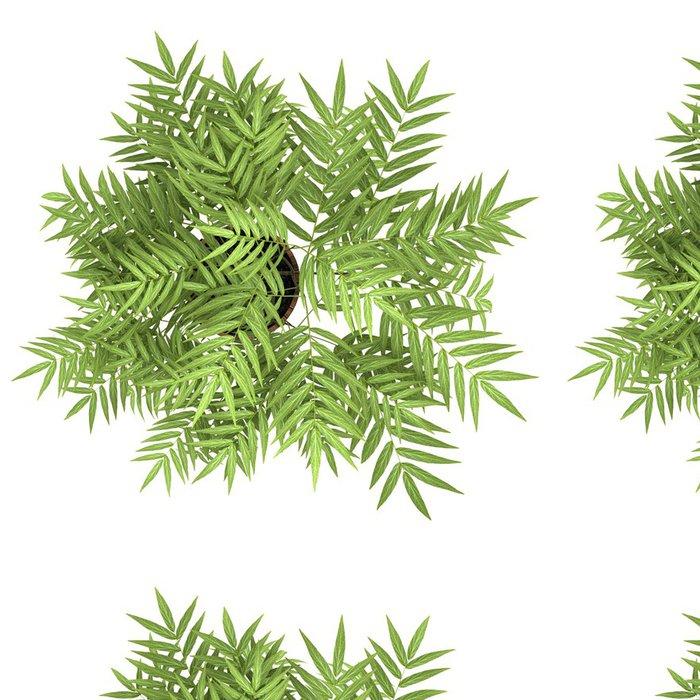 Tapeta Pixerstick Pohled shora na dekorativní strom v hrnci na bílém pozadí - Rostliny