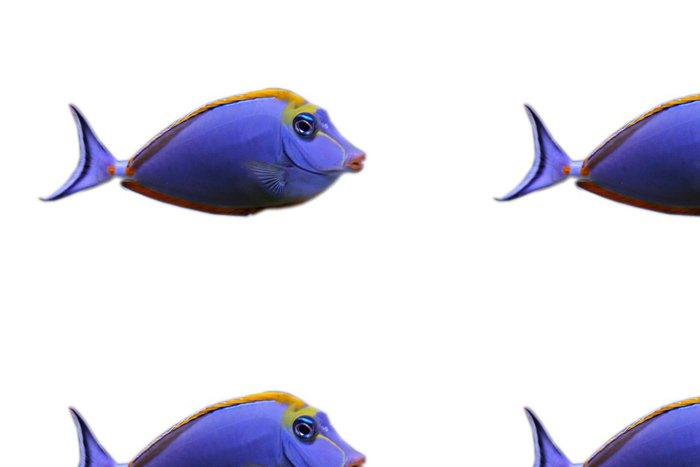 Vinylová Tapeta Poisson d'akvárium - Vodní a mořský život