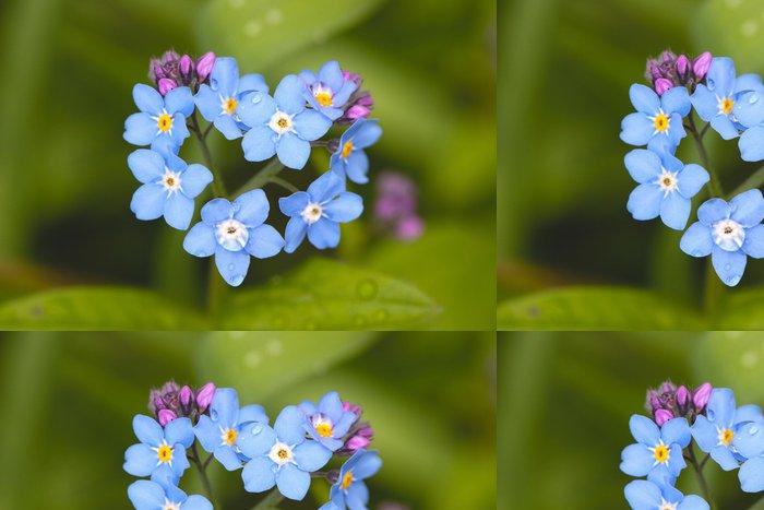 Tapeta Pixerstick Pole Forget-me-not (Myosotis arvensis) - Květiny