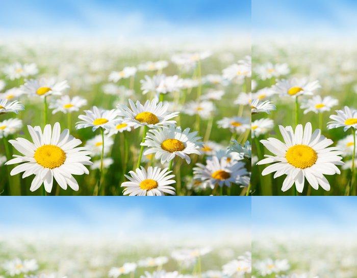 Tapeta Pixerstick Pole květy sedmikrásky - Roční období