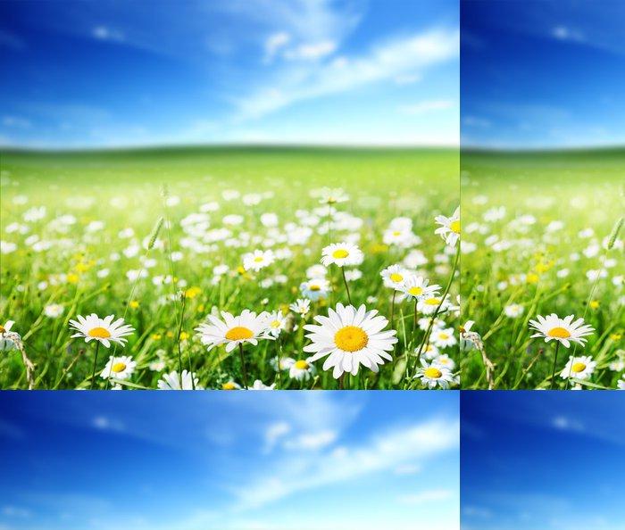Tapeta Pixerstick Pole květy sedmikrásky - Květiny