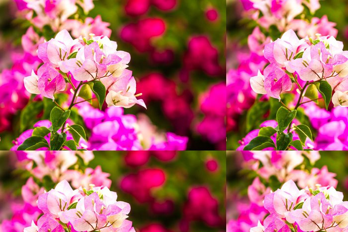 Tapeta Pixerstick Popínavé rostliny kvetou v Thajsku Chiangmai - Květiny