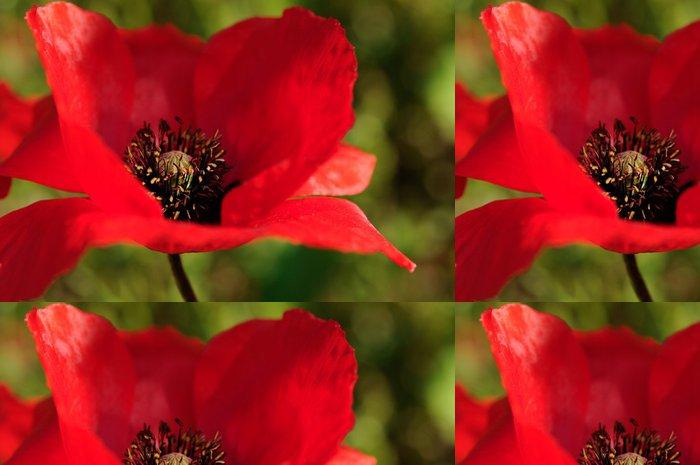 Tapeta Pixerstick Poppy makro - Roční období