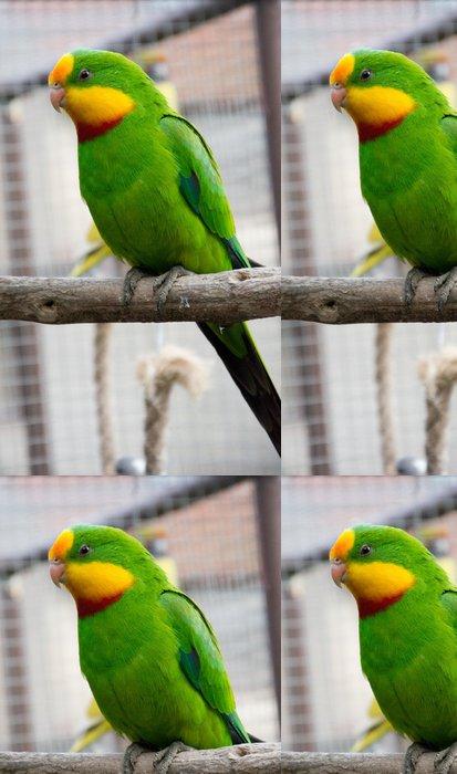 Tapeta Pixerstick Port Lincoln Parrot - Australský Ringneck - Témata