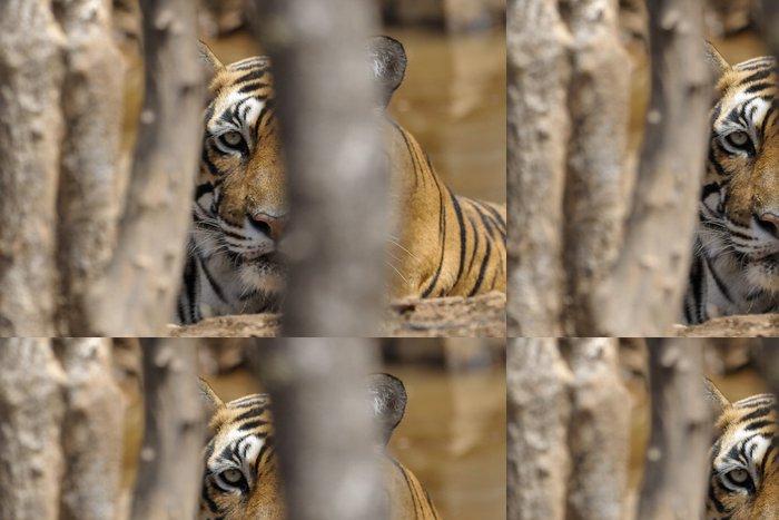 Tapeta Pixerstick Portait bengálského tygra přes stromy. - Savci