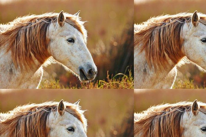Tapeta Pixerstick Portrét bílý kůň Camargue v podsvícení - Témata