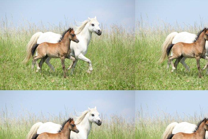 Tapeta Pixerstick Portrét krásné arabského koně - Savci