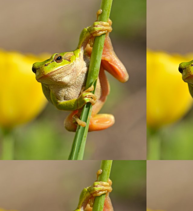 Tapeta Pixerstick Portrét žába - Ostatní Ostatní