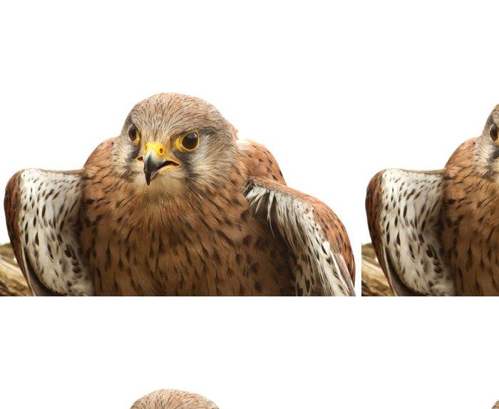Tapeta Pixerstick Poštolka pták na bílém pozadí - Ptáci